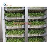Exportador profissional de máquina do Sprout de feijão de Mung para a venda