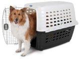 جديدة تصاميم [إيتا] كلب شركة نقل جويّ