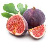 Extrato do figo do pó do figo do extrato de Ficus Carica da amostra livre da alta qualidade