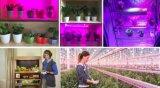LED-Pflanzenwachstum-Streifen-flexibles Licht mit Cer u. RoHS