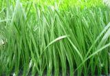 مرج اصطناعيّة, عادية [أوف-رسستنس] [20مّ-50مّ] عشب اصطناعيّة