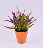 Цветастый цветок пены иглы сосенки с баками