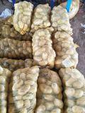 Haut de la qualité de l'exportation de pommes de terre fraîches
