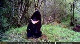 Bestguarder 12MP 1080P ИК-скауты камеры охота игры камера с дальность обнаружения до 75 футов
