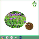 Pure Natural Hyperin Fortune Eupatorium Extract 5: 1 ~ 20: 1