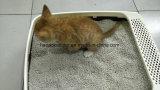 Vente de déchets sauvages de chat de bentonite de bille la meilleure