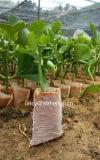 Tessuto non tessuto degli ss Spunbond per la piantatura del sacchetto verde