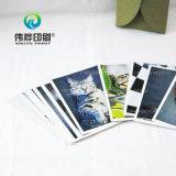 애완 동물 고양이에게서 인쇄하는 고품질 그림엽서