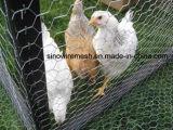 Sailinの家禽の塀のための六角形の金網