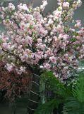 高い模造結婚式は桜を飾った