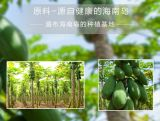 Polvere della papaia
