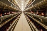 Слой курицы клеток для домашней птицы фермы для Нигерии