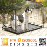 Dalian에 있는 공장 Price Pet Kennel
