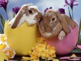 Зайчик плюша пасха смешного зайчика подарка дня пасха кролика плюша мягкий заполненный оптовый