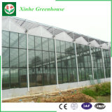 Serra di vetro del ristorante economico con la struttura d'acciaio di Glavanized