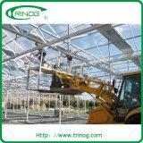Estufa de vidro comercial para granja em grande escala