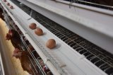 家禽装置の高容量電池の層の養鶏場のケージ