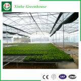 Serre chaude en verre de constructeur de Muti- de système hydroponique chinois d'envergure pour l'agriculture