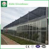 Invernadero de cristal agrícola del invernadero del palmo barato de Muti