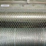 Rete metallica della gabbia di pollo di fabbricazione di Anping/reticolato esagonali galvanizzati della rete metallica del pollo