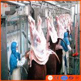 가축 도살 선 기계 도살장 장비 버팔로 둔감한 황소 Bull 푸줏간 주인 플랜트 도살장을%s 가진 Halal 살해 상자