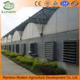 Agricultura Plástico Po Película de gran efecto de invernadero multi