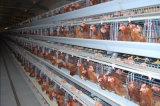 販売のためのフルオートマチックの卵の鶏のケージ装置