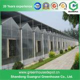 Einzeln-Überspannung Wasserkultur-PC Blatt-Gewächshaus hergestellt in China