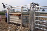 Esmagamento galvanizado resistente do aperto do gado