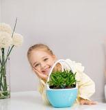 La decoración del hogar Oficina Desktop difusor de aroma con iones negativos y Aroma Plant-Extracted Tablet