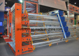Bateria de frango Pachtry Cages with Automatic System