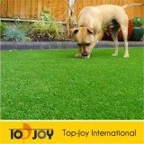 Artificialturf para perro jugando (TJ-4000)