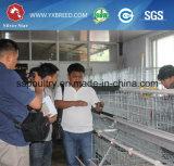 Cage de poulet galvanisé à chaud DIP / cage d'oiseaux pour la couche