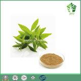 Extracto de Verbena de Limão Antioxidante, Extracto de Folha de Bálsamo de Limão, Ácido Rosmarínico