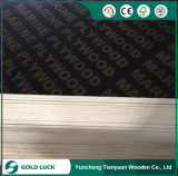 A película concreta de Polpar da construção de painéis de Plex do molde enfrentou a madeira compensada 1220X2440mm