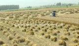 La mejor pequeña carpeta de segador de la máquina segador del trigo de China