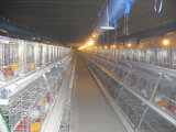 Das Huhn, welches das Hünchen bewirtschaftet, sperrt das Korb-automatische Gerät ein, das heiß ist,/galvanisiert Kälten (ein Typ)