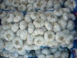 Здоровье еды свежего чеснока гловальное против Cancer от Китая