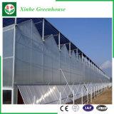 Дом аграрного экономичного поликарбоната зеленая для овоща