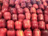 Nuove mele di stella rosse della frutta fresca