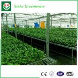 Gemüse verwendetes Plastikfilm-Gewächshaus für Verkauf
