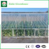 La migliore produzione della serra del cetriolo per crescere