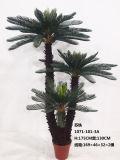 정원을%s 인공적인 Cycas Revoluta