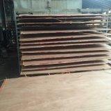 madera contrachapada comercial del gradiente de 1220*2440m m BB/CC para la construcción