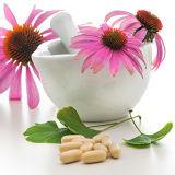 Extrait 100% naturel d'échinacea Purpurea (haute qualité, prix le plus juste)