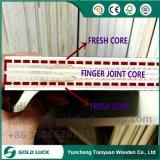 Formwork 사용을%s Glue Finger Joint Core 18mm Phonolic 접착제 씨 합판