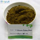 Usine extrait de plante naturelle Echinacea purpurea Extract