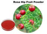 Vitamine C van het Uittreksel van de Rozebottels van Whosale nam de Wilde het Uittreksel van het Fruit toe