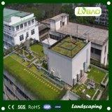 装飾の夏の屋上の草