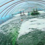 Polvere organica di Spirulina di supplemento naturale di nutrizione di 100%